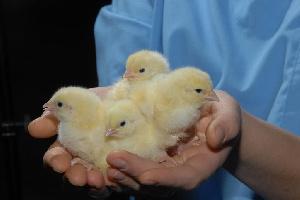 Семинар «Сальмонеллез в промышленном птицеводстве: современные методы обнаружения, контроля и профилактики»