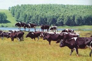 Житель Ростова-на-Дону разработал инновационный ошейник для коров