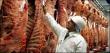 Американские мясокомбинаты могут столкнуться с падением прибыли