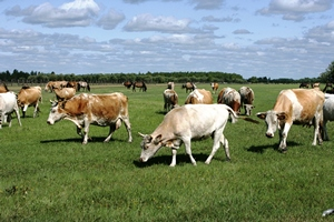 ТIKA планирует реализовать в Гагаузии ряд проектов в области животноводства