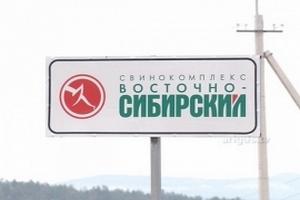 Крупнейший свинокомплекс Бурятии выходит на монгольский рынок