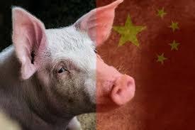 На юге Китая зафиксировали вспышку африканской чумы свиней