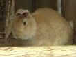 Кролики станут альтернативой поросятам из-за эпидемии АЧС на Кубани
