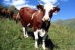 Ход зимовки скота и подготовки к весенне-полевым работам рассмотрели в Гумбетовском районе Дагестана