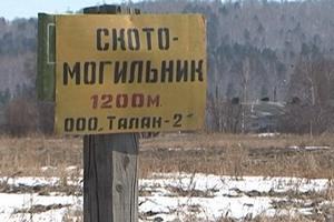 Скандальный свинокомплекс «Талан-2» отозвал заявление о своём банкротстве