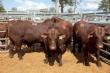 Алтайский край наращивает темпы производства говядины
