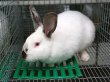 У «Племенного завода кролика» не нашлось покупателей на 14 тысяч животных