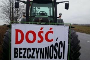 Польские ветеринары не готовы бороться с чумой свиней за низкие зарплаты