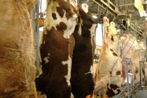 В Верхнеуслонском районе РТ строится цех по забою скота