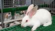 Казахстанские кролиководы покрывают лишь 20% спроса