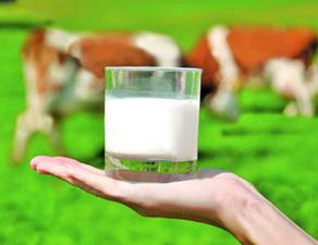 Минсельхоз: молочка должна догнать птицеводство