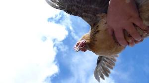 Смоленску разрешили поставлять куриное мясо в Ирак