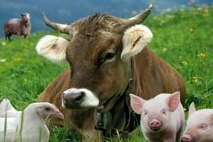 Ульяновские животноводы стали первыми в ПФО