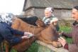 За отказ от вакцинации животных фермеров будут штрафовать