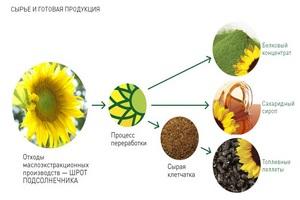 Завод белкового концентрата в Республике Алтай заработает в начале лета