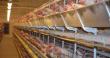 В 2020 году Рефтинская птицефабрика планирует удвоить объем экспорта