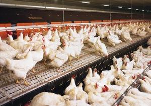 Ветеринары рекомендовали птицефабрикам на Алтае работать в закрытом режиме
