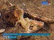 Прокуратура выясняет организатора несанкционированного скотомогильника в Светлоярском районе