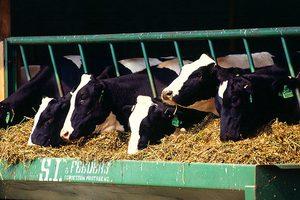 В Ребрихинском районе Алтайского края реконструировали шесть объектов животноводства