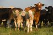 В Алатырском районе Чувашии собираются восстанавливать молочное и мясное производство