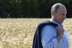 Путин: сельское хозяйство РФ сможет удовлетворить нужды своего рынка
