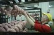 «Выпали из орбиты господдержки»: Калининградские мясопереработчики оказались на грани исчезновения