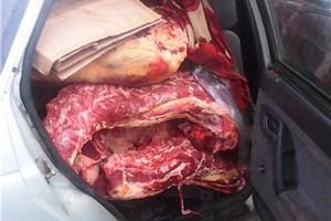 В Ростовской области на границе с Украиной задержаны полтонны нелегальной говядины