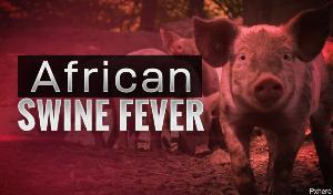 Во Вьетнаме из-за вспышки АЧС уничтожили 1,2 млн свиней