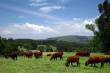 В Грузии может подорожать мясо