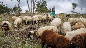 В Испании создан тренировочный лагерь для скотоводов