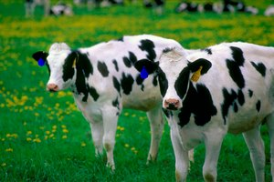 В Золотухинском районе Курской области зафиксировали массовую гибель скота