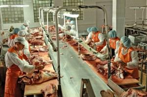 В Оренбуржье открывается мясоперерабатывающий завод «Оренбив»