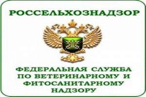 С 1 по 7 января на МАПП Забайкальск совершено 16 нарушений ветеринарного законодательства