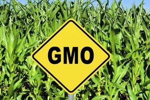 Минсельхоз предложил ввести акциз на продукты с ГМО