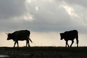 Учхоз «Липовая гора» остался без энергоснабжения