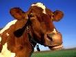 """Россельхознадзор запретил везти на """"Золотую осень"""" вакцинированных против ящура животных"""