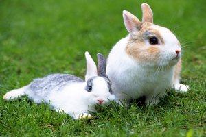 Германских кроликов, живущих в аэропорту почти месяц, могут уничтожить
