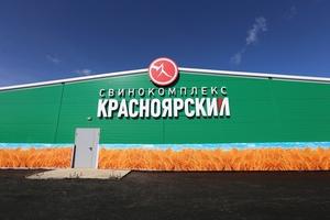 Свинокомплексу «Красноярский» грозит приостановка деятельности из-за серьезных нарушений