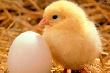 Около 1 млрд. рублей вложат инвесторы в реконструкцию птицефабрики на Кубани