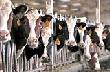 В Нижегородской области субсидиями поддержат производство сельхозпродукции