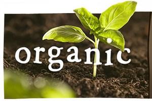 На «Золотой осени» обсудили перспективы развития органического хозяйства