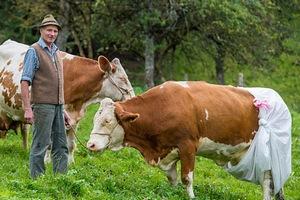 В Башкирии форсируют перевод личных подсобных хозяйств в фермерские