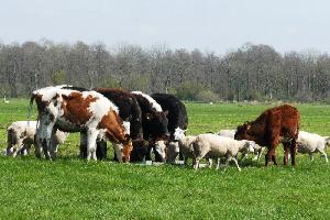 Более 1,5 млрд рублей выделили на развитие нижегородского животноводства в 2020 году