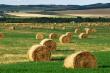 Минсельхоз России: заготовлено 38,5 млн тонн грубых и сочных кормов