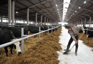 Порядка трех десятков животноводческих ферм построено и реконструировано в Дагестане в 2018 году