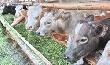 Пензенским предприятиям необходимо увеличить объемы производства мяса говядины