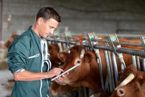 Первый за девять лет случай заболевания скота сибирской язвой выявлен в Великобритании
