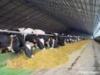 Представлены 4 инвестпроекта в сфере животноводства