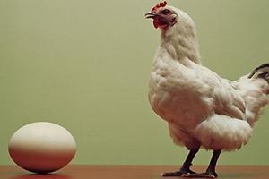 На птицефабрике «Пионерское» курицы будут нестись в комфортных условиях