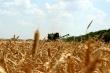 Ткачев: Россия готова возобновить экспорт зерна в Турцию